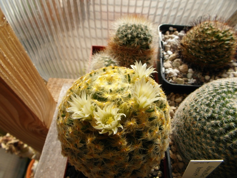 Cacti and Sukkulent in Köln, every day new flowers in the greenhouse Part 44 Bild_130