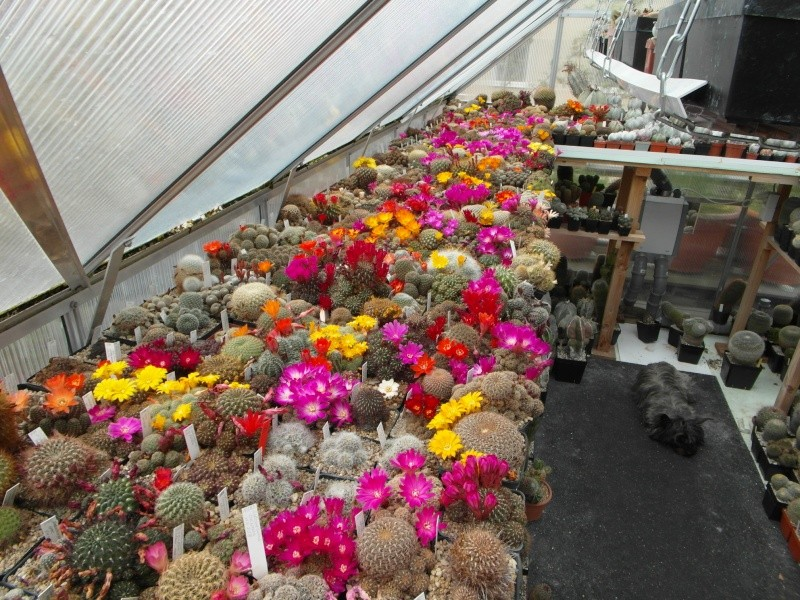 Cacti and Sukkulent in Köln, every day new flowers in the greenhouse Part 46 Bild_519