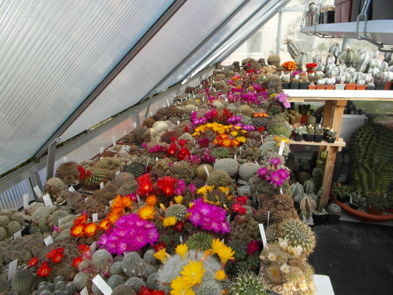 Cacti and Sukkulent in Köln, every day new flowers in the greenhouse Part 47 Bild_588