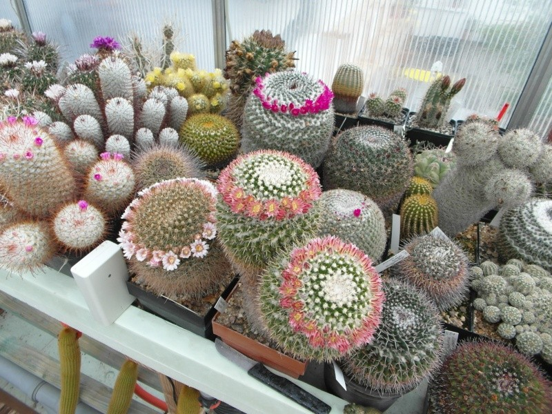 Cacti and Sukkulent in Köln, every day new flowers in the greenhouse Part 49 Bild_846