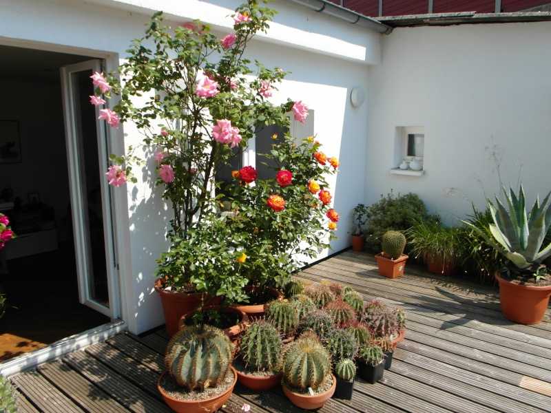 Cacti and Sukkulent in Köln, every day new flowers in the greenhouse Part 50 Bild_921