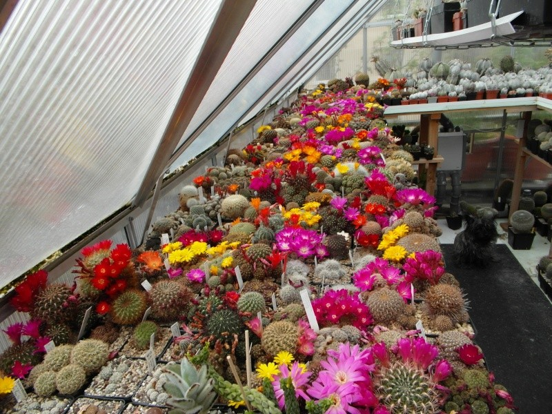 Cacti and Sukkulent in Köln, every day new flowers in the greenhouse Part 50 Bild_986