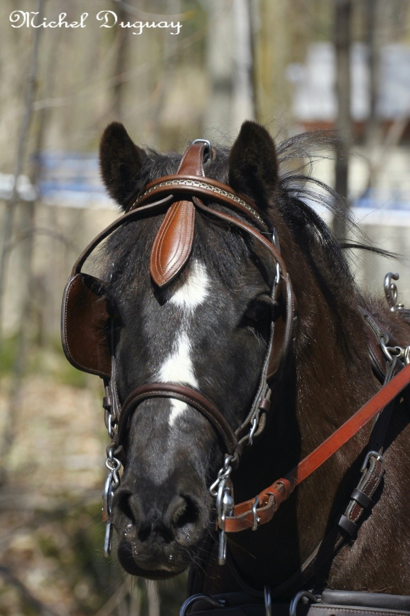 Cheval  Img_3812