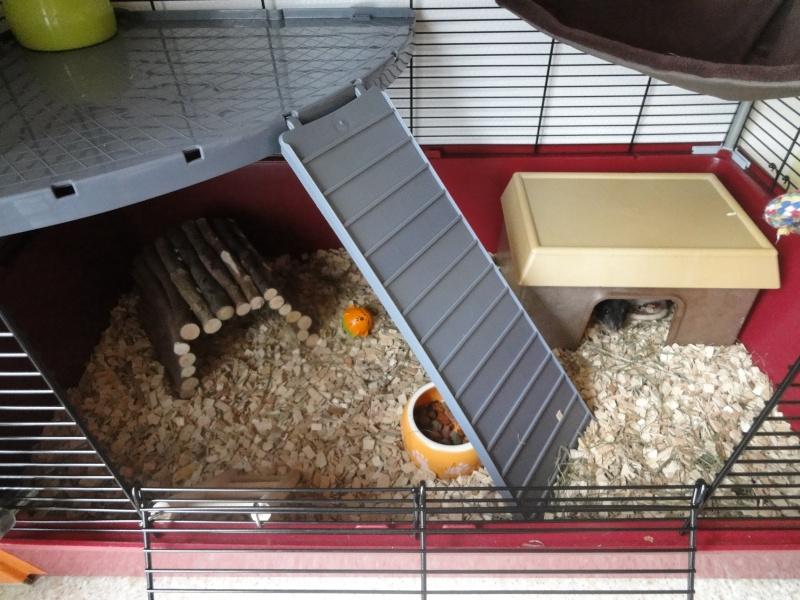 La cage de Litchee et Myrtille Dsc05412