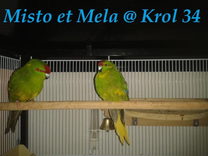 Présentation de Becco et Piuma 34 Mela_e10