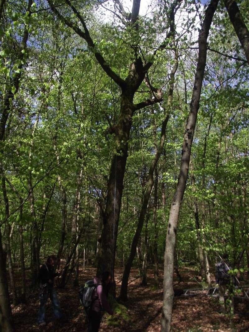 savez vous grimper aux arbres... - Page 3 113