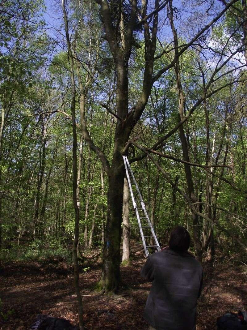 savez vous grimper aux arbres... - Page 3 214