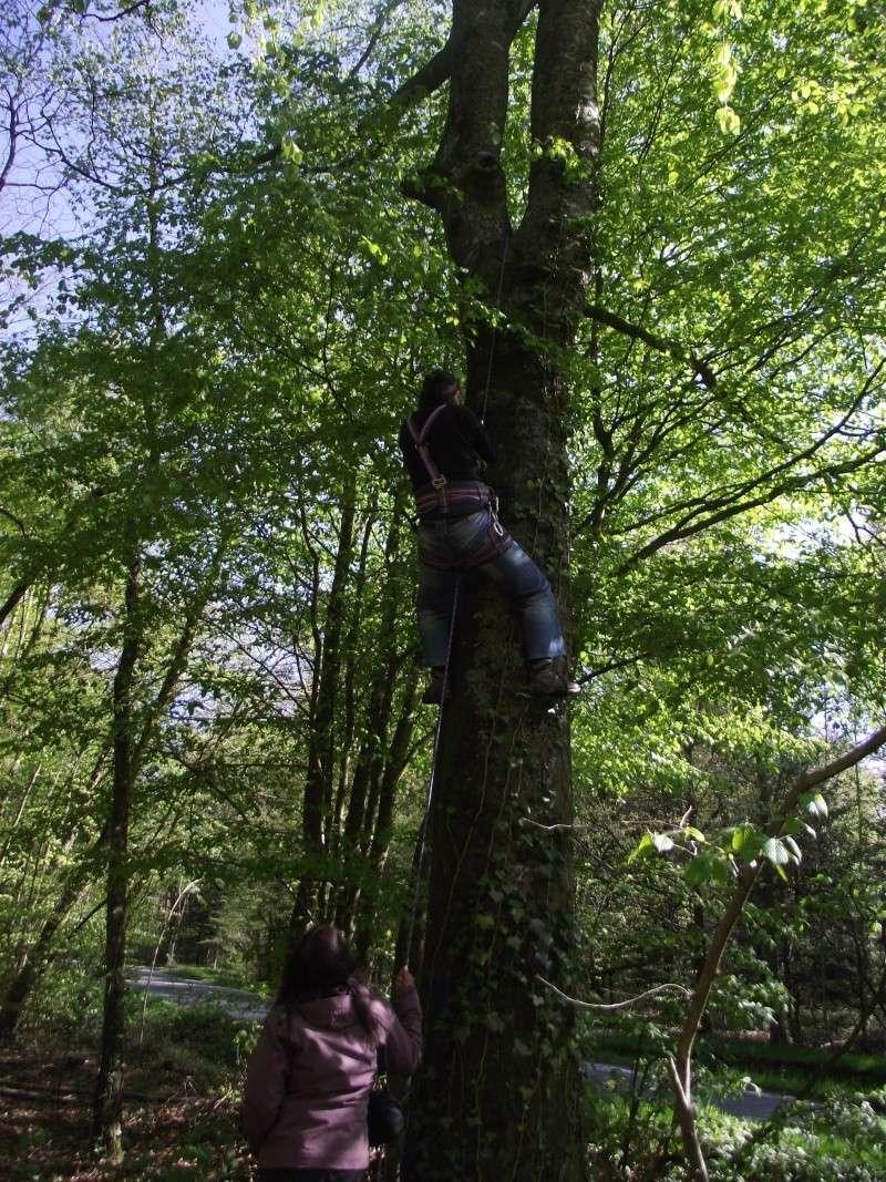 savez vous grimper aux arbres... - Page 3 2_519