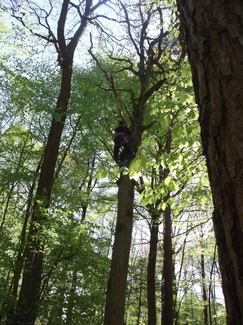 savez vous grimper aux arbres... - Page 3 310