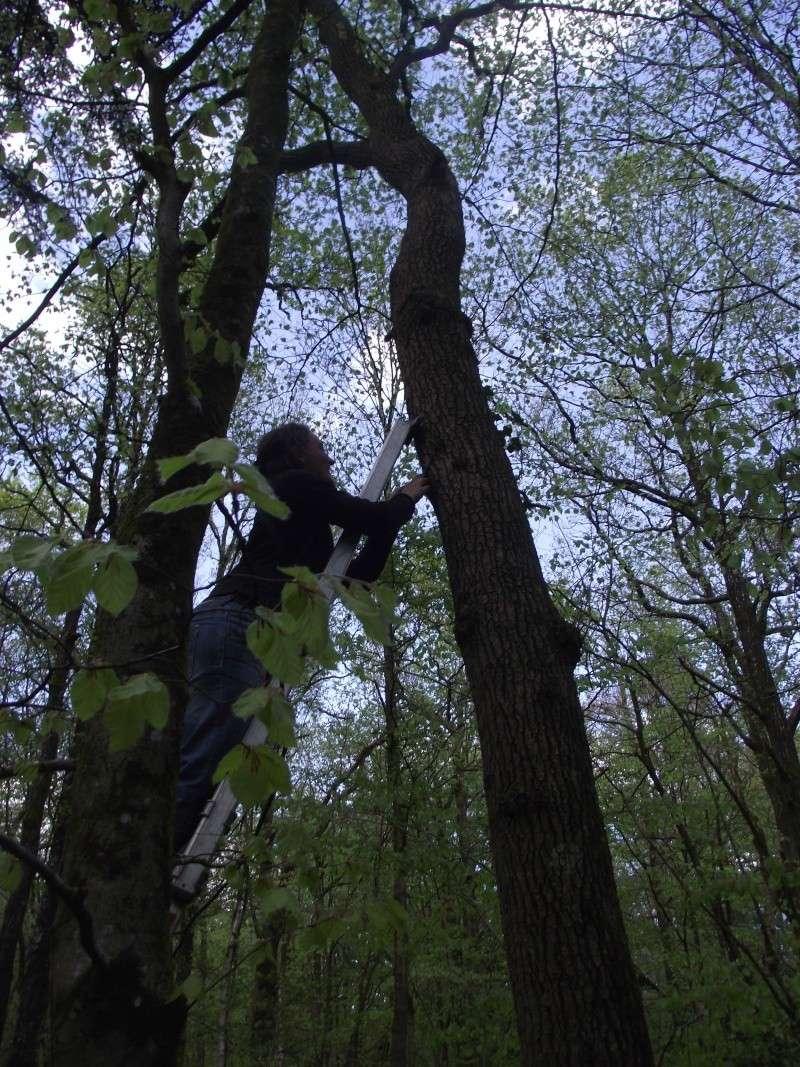 savez vous grimper aux arbres... - Page 3 410