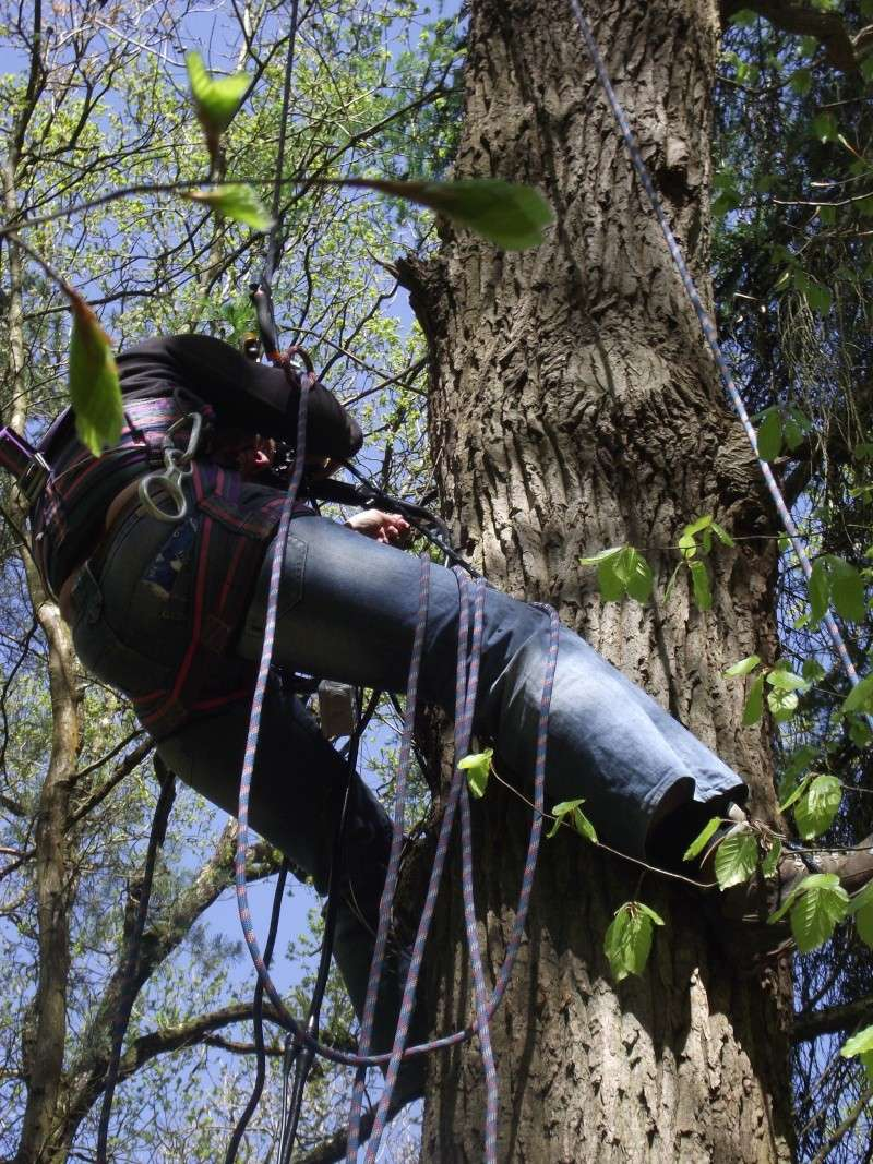 savez vous grimper aux arbres... - Page 3 510