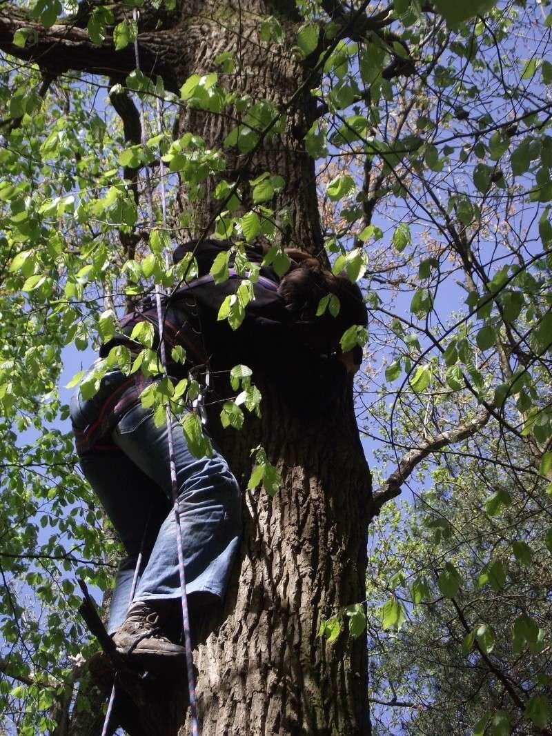 savez vous grimper aux arbres... - Page 3 5_510