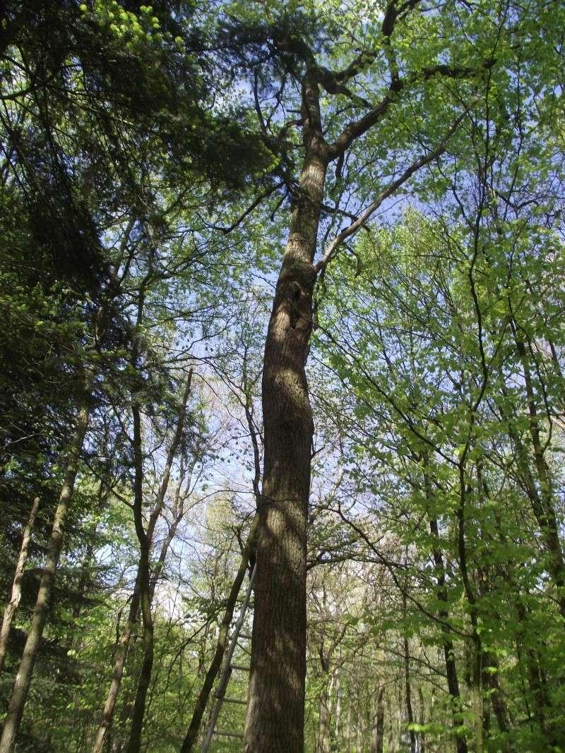 savez vous grimper aux arbres... - Page 3 610