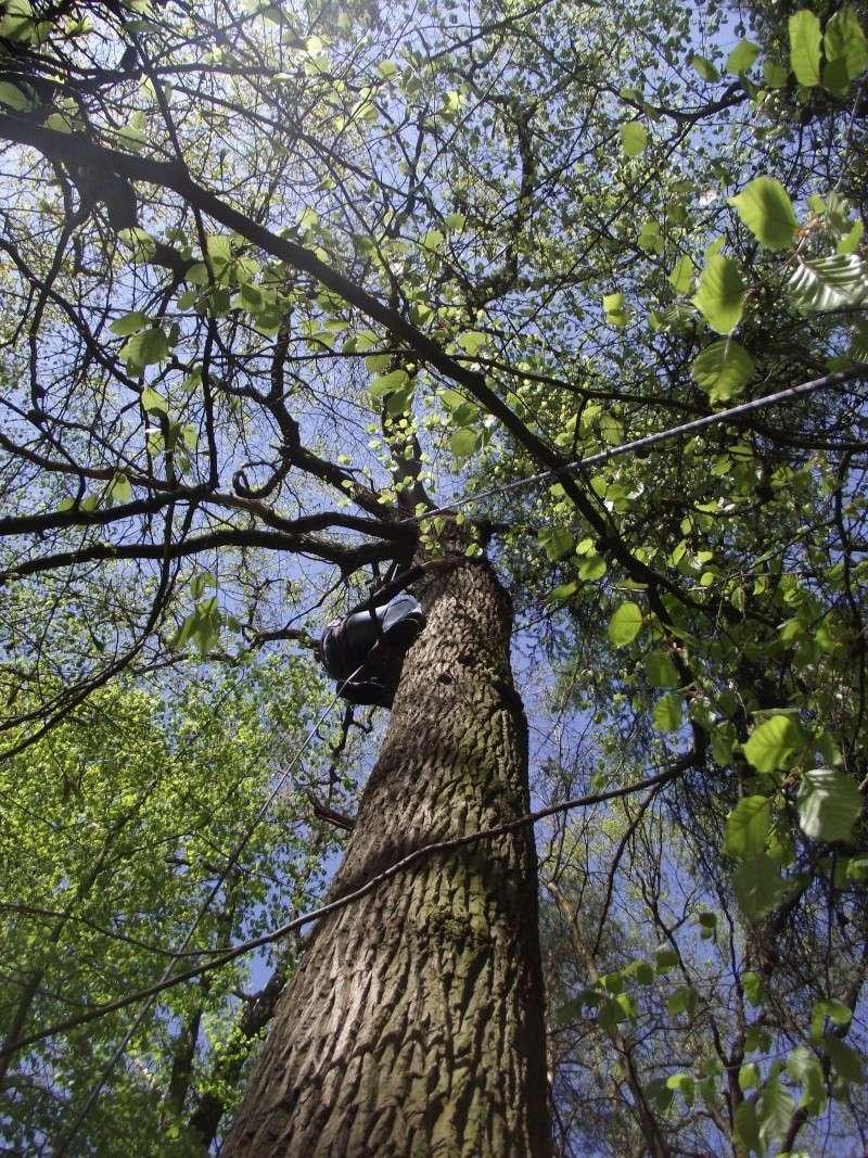 savez vous grimper aux arbres... - Page 3 710