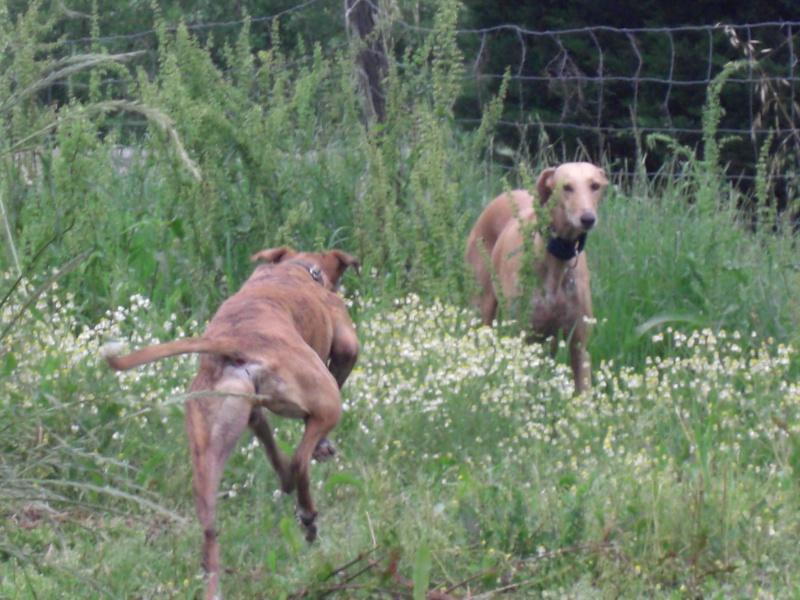 "Les"" Doggies"" de La Rive - Page 4 Dogsca36"