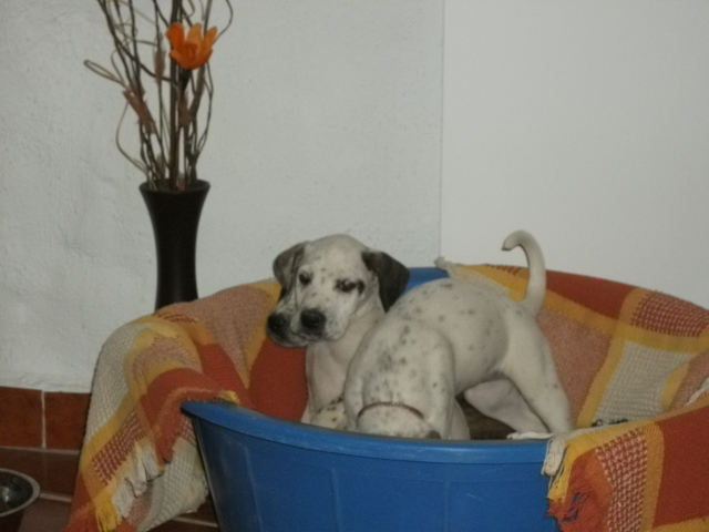Home wanted for Adorable Puppy 01416