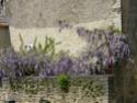 Thème du mois de Mai 2013 : Le printemps est enfin là ! Explosion de la nature Photo_11