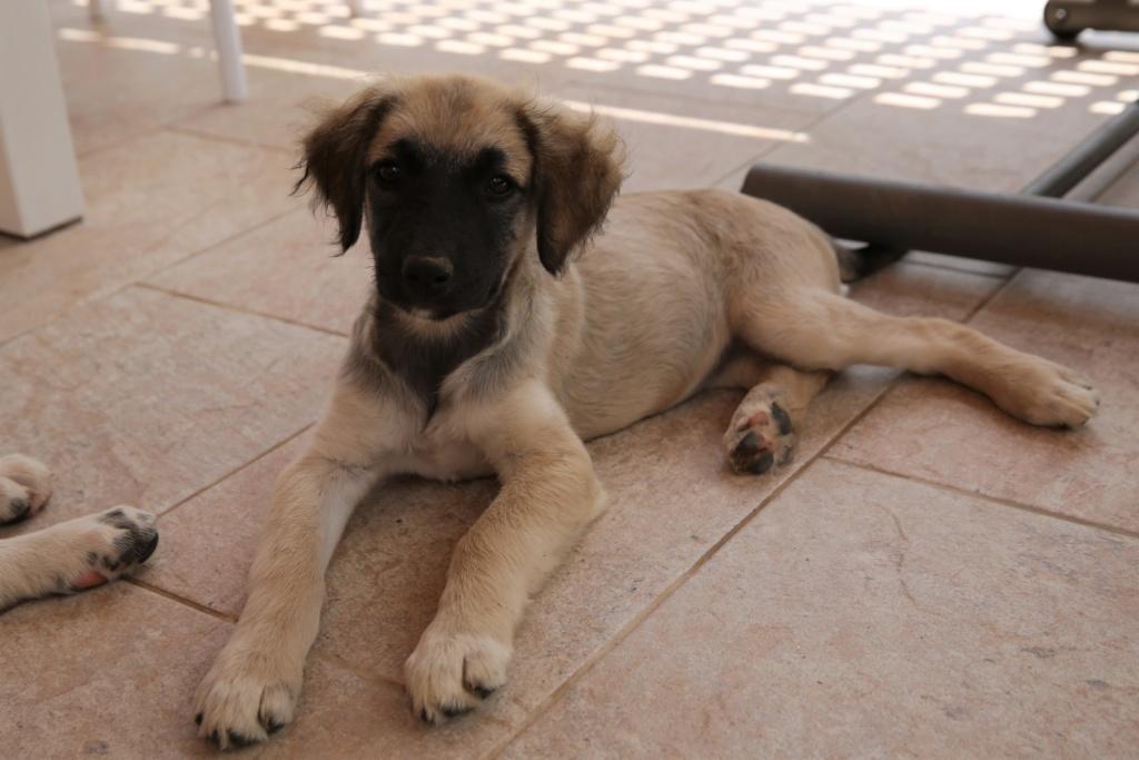 Ruby, petite chienne née en mai 2018 Hx9a8315