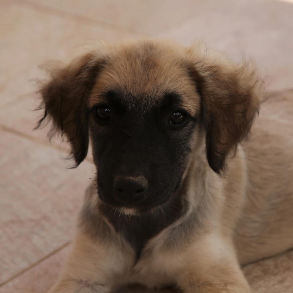 Ruby, petite chienne née en mai 2018 Hx9a8318