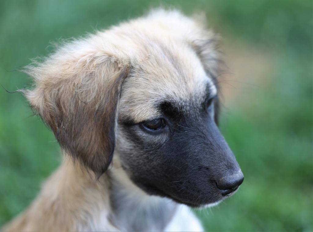Ruby, petite chienne née en mai 2018 Hx9a8417