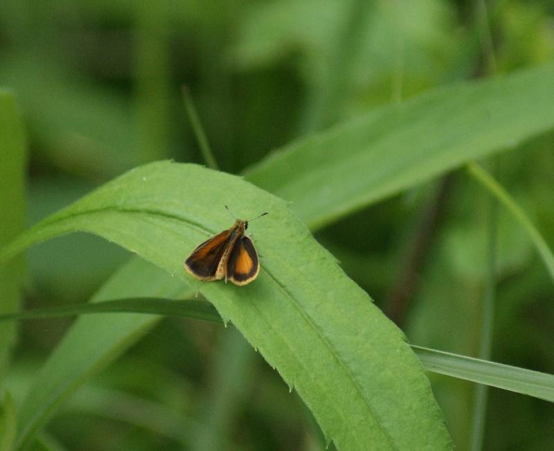 Papillons Parc_d59