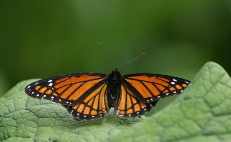 Papillons Parc_d60