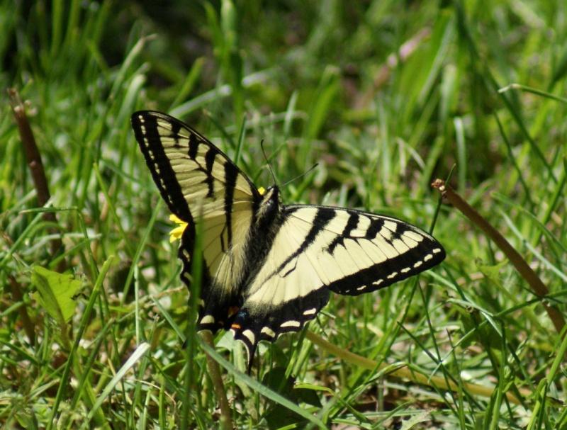 Papillons Parc_n21