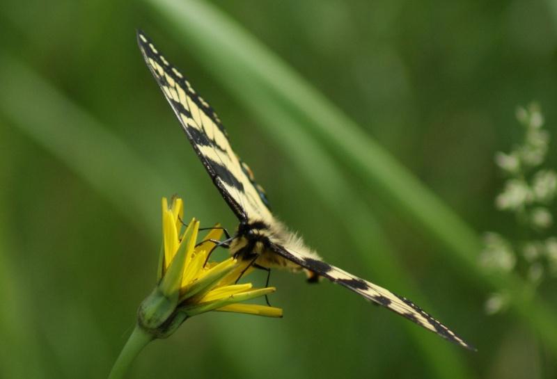 Papillons Parc_n22