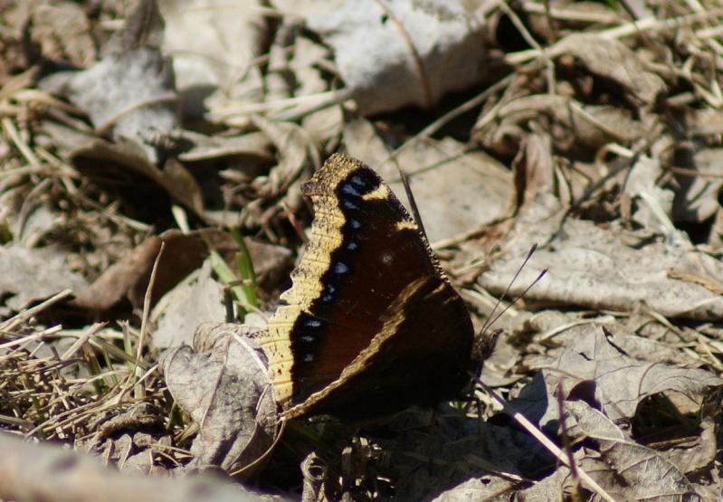 Papillons Parc_n23