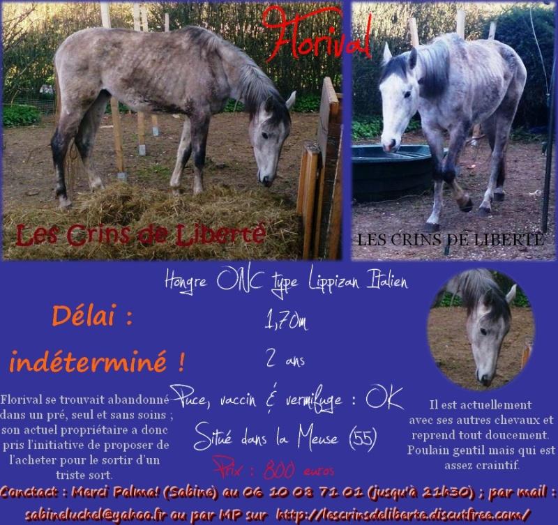 (Dept 55) Florival, ONC type Lipizzan, Sauvée par jojo3871!!!!! (Mai 2013) Floriv10