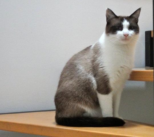 Photos des chats sauvés, avant/après 13678210