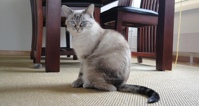 Photos des chats sauvés, avant/après - Page 2 13681910
