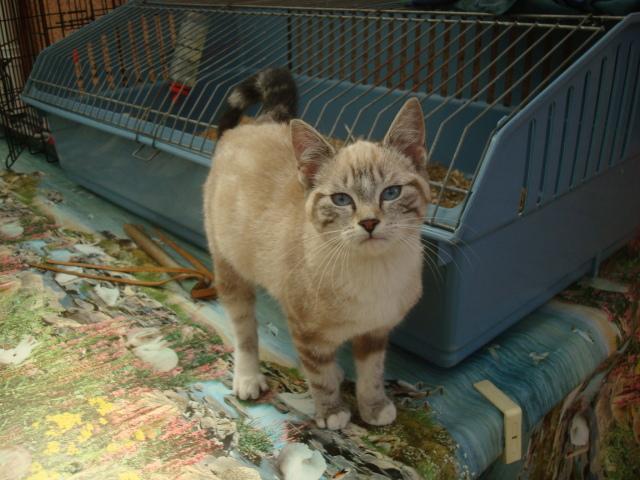 Photos des chats sauvés, avant/après - Page 2 Aloha10