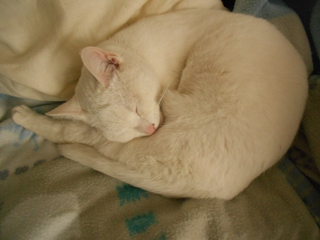 Photos des chats sauvés, avant/après Irisha11