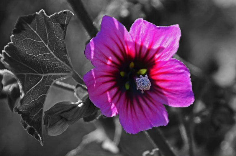 Le printemps le printemps, enfin de la couleur ! Img00610