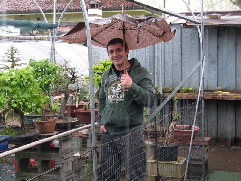 Un biancospino che diventa bonsai...... - Pagina 6 Img_0010