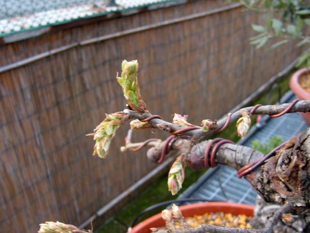 Quercus cerris - Pagina 3 Img_0023