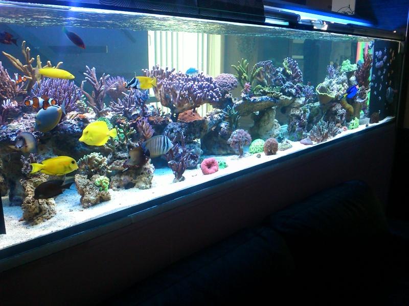 Micspit's Reef ;) Dsc_0318