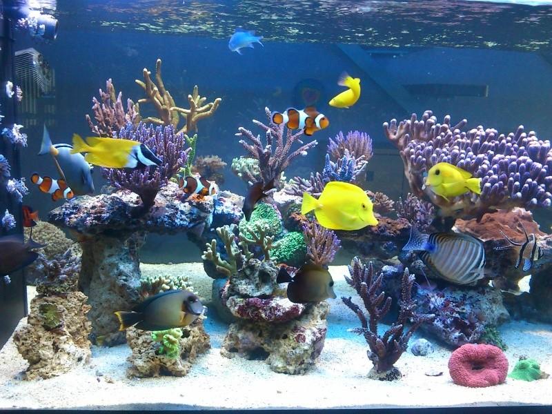 Micspit's Reef ;) Dsc_0320