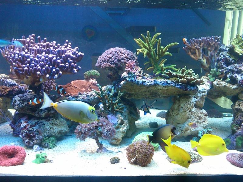 Micspit's Reef ;) Dsc_0321