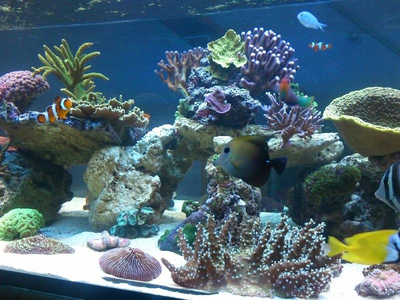 Micspit's Reef ;) Dsc_0324