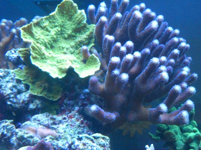 Micspit's Reef ;) Dsc_0326