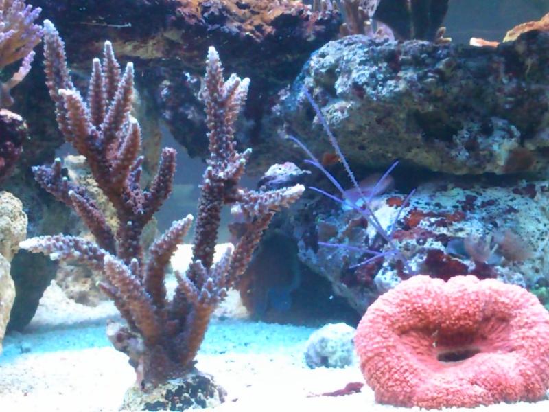 Micspit's Reef ;) Dsc_0327