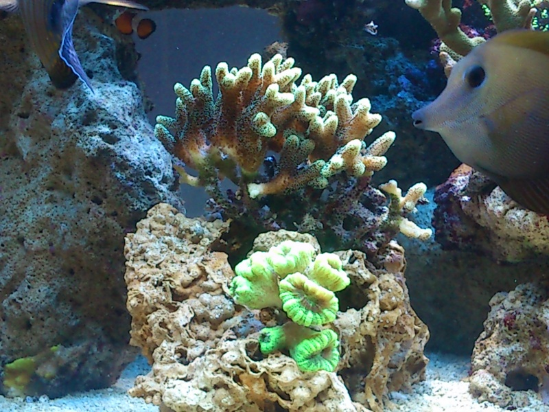 Micspit's Reef ;) Dsc_0328