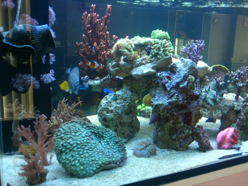 Micspit's Reef ;) Dsc_0329