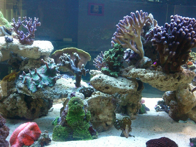 Micspit's Reef ;) Dsc_0330