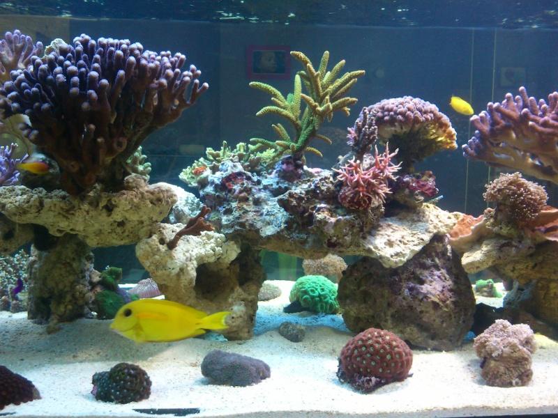 Micspit's Reef ;) Dsc_0331