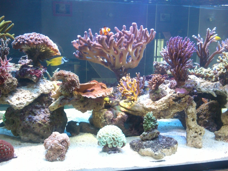 Micspit's Reef ;) Dsc_0332