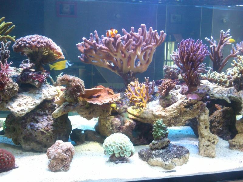 Micspit's Reef ;) Dsc_0333