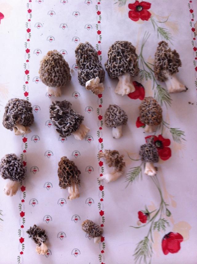 Les champignons , ( girolles , cèpes , morilles ) etc ...  - Page 2 00310